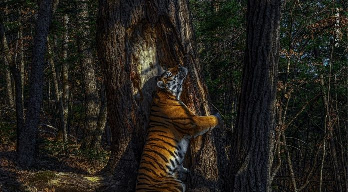 Wildlife Photographer of the Year mostra Forte Bard
