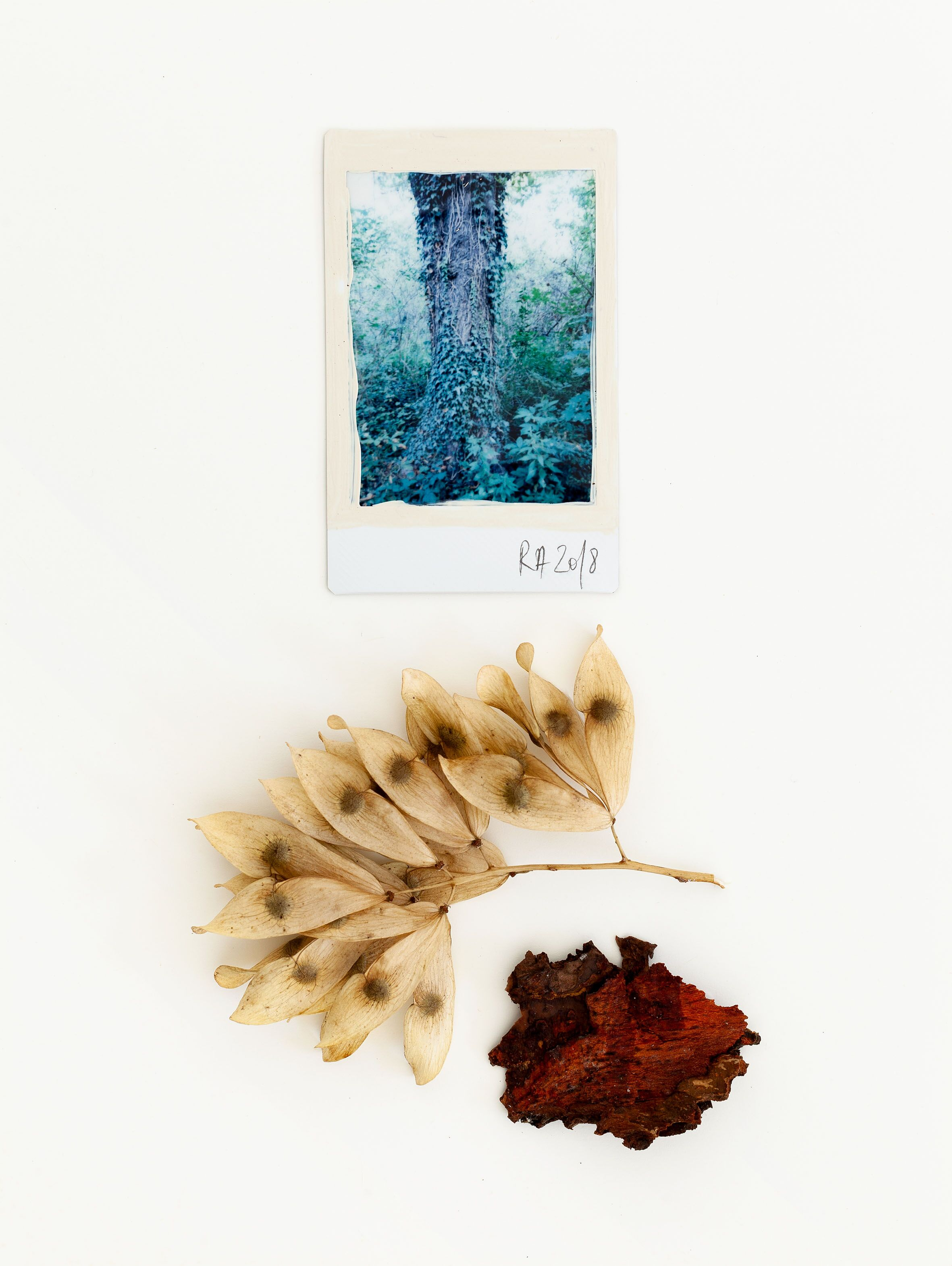 Regina Maria Anzerberger, Native Grounds XXIV, 2018, mixed media, instant film, acrylic, found objects, framed, 24 x 18, 1 (unique), Courtesy Regina Anzerberger/AnzerbergerGallery
